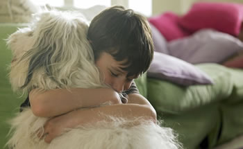 What Happens to Pets in a Divorce?